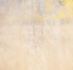 Autumn Texture III